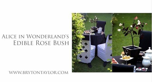 Alice in Wonderland's Edible Rose Bush